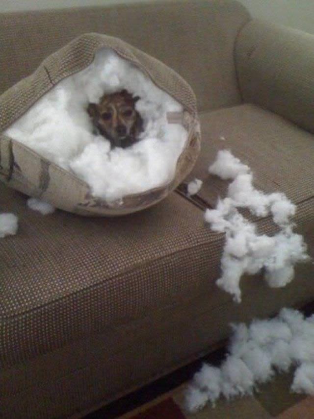 Perros solos en casa (3)