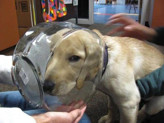 Perros solos en casa (2)