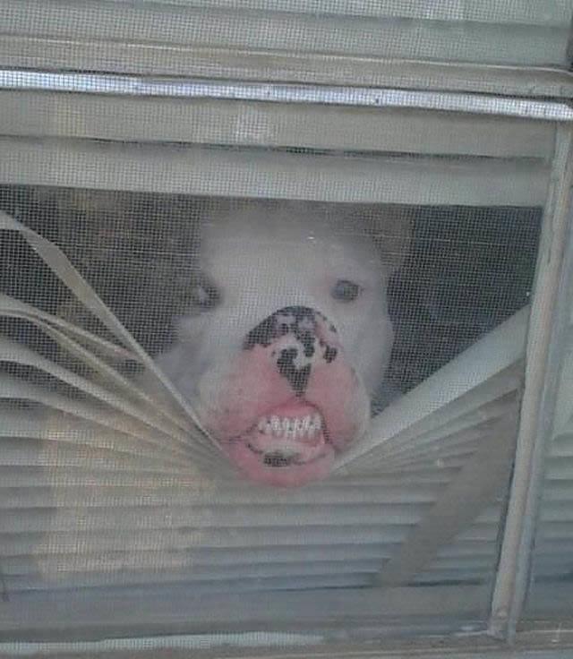 Perros solos en casa (1)