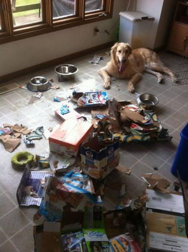 Perros solos en casa (22)