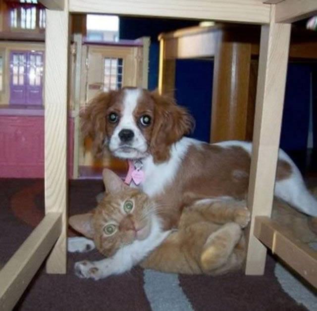 Perros solos en casa (18)