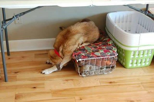 Perros solos en casa (14)