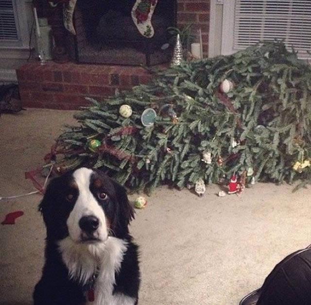 Perros solos en casa (9)