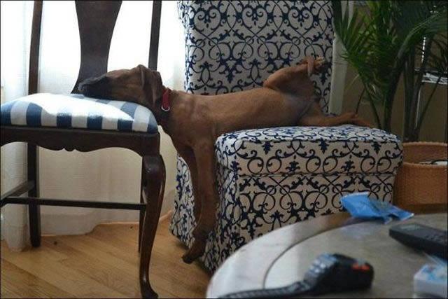 Perros solos en casa (8)