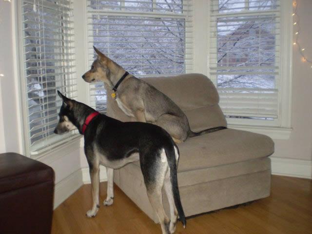 Perros solos en casa (6)
