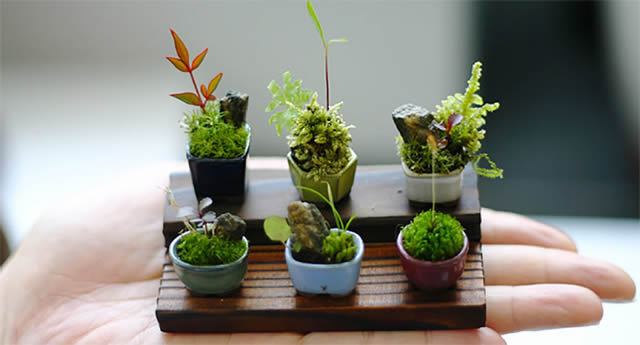 cho-mini bonsái (1)