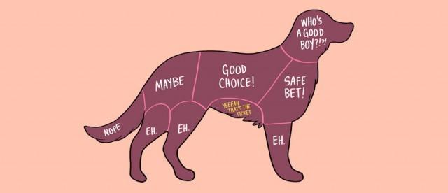 acariciar a las mascotas (3)