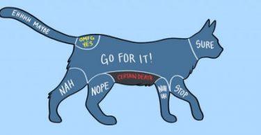 acariciar a las mascotas (5)