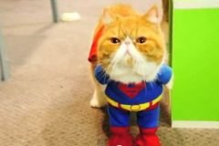 gato heroe