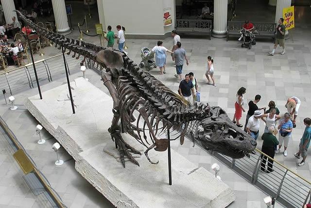 Sue dinosaurio