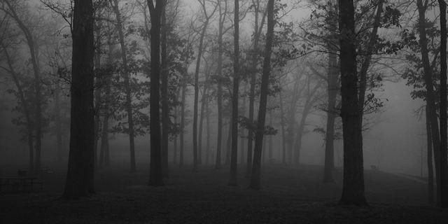 bosque sombrio