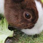 ¿Qué animales son usados para hacer sacos de piel?