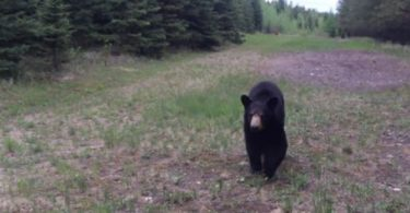 oso canada alberta