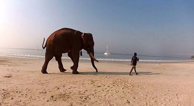 rajan elefante nadador (1)