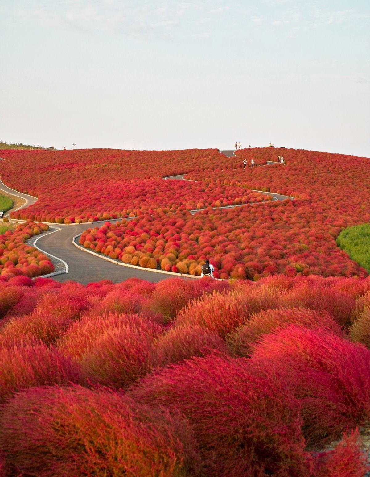 Parque Hitashi Japon (5)