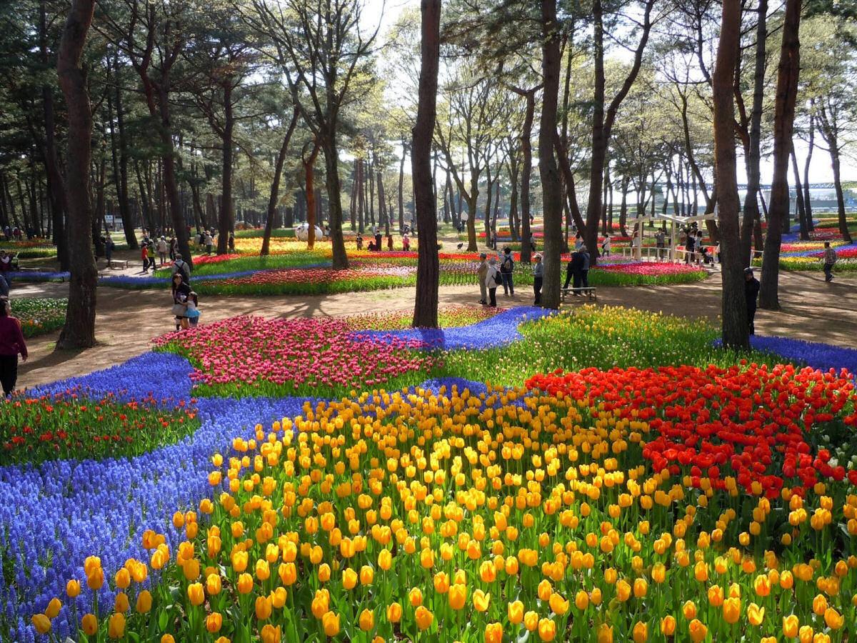 Parque Hitashi Japon (4)