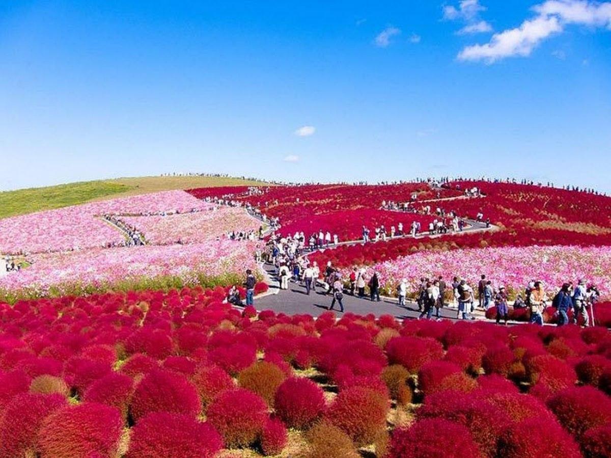 Parque Hitashi Japon (3)