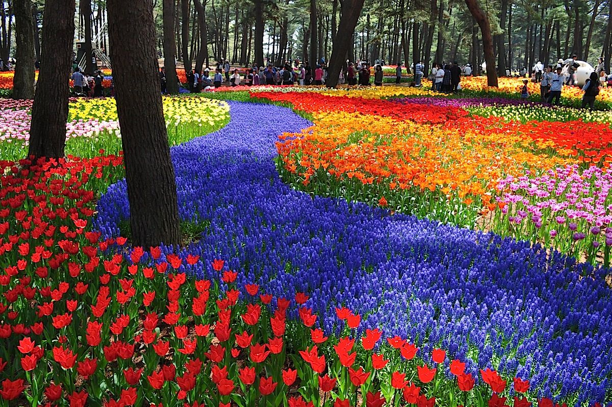 Parque Hitashi Japon (2)