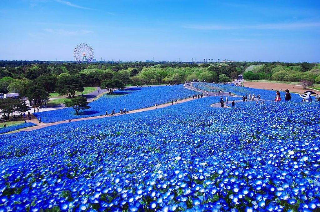 Parque Hitashi Japon (9)