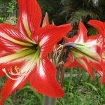7 flores hermosas, pero terriblemente peligrosas