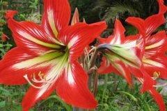 flores venenosas