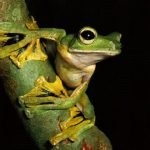 10 animales con extrañas características corporales