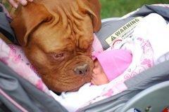 bebes perros gigantes fotografía (3)