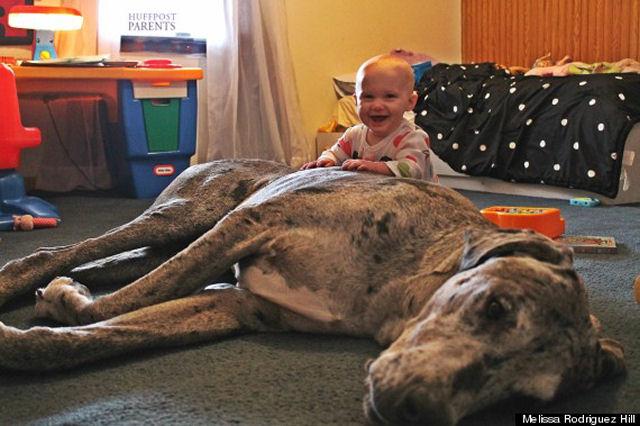bebes perros gigantes fotografía (27)