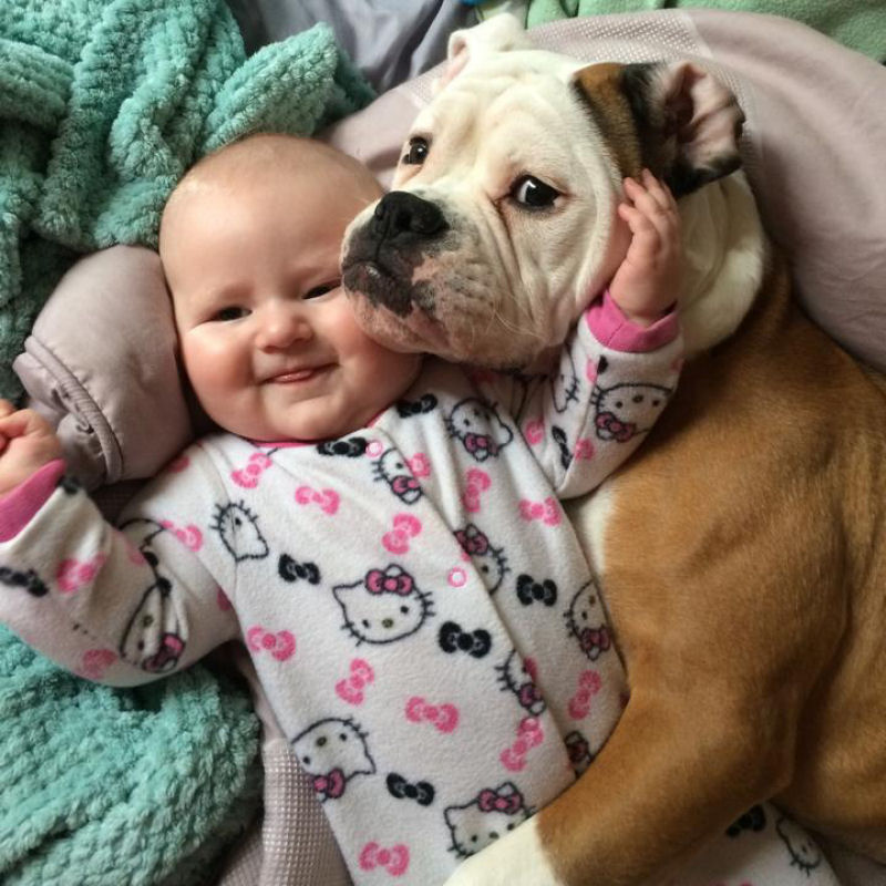 bebes perros gigantes fotografía (26)