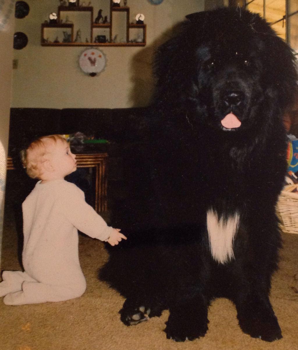 bebes perros gigantes fotografía (25)