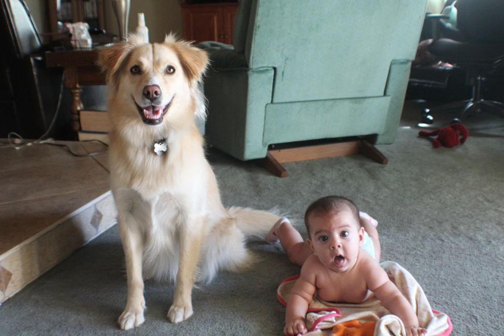 bebes perros gigantes fotografía (24)