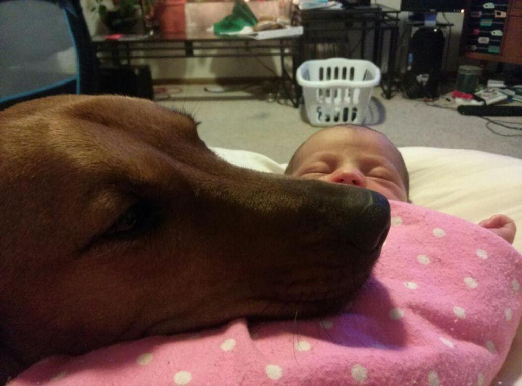 bebes perros gigantes fotografía (23)