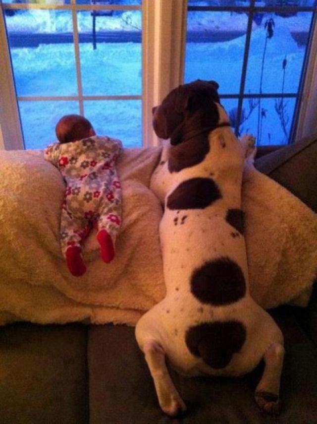 bebes perros gigantes fotografía (21)