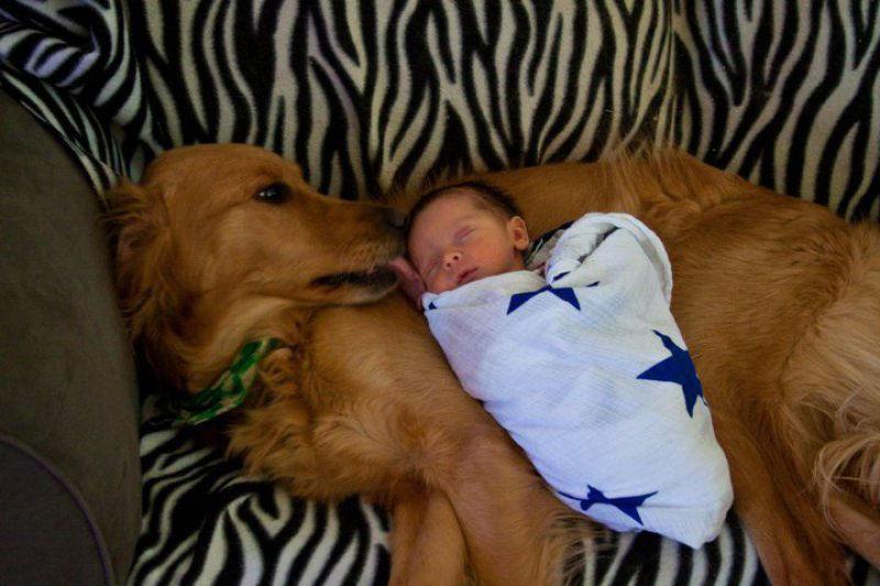 bebes perros gigantes fotografía (18)