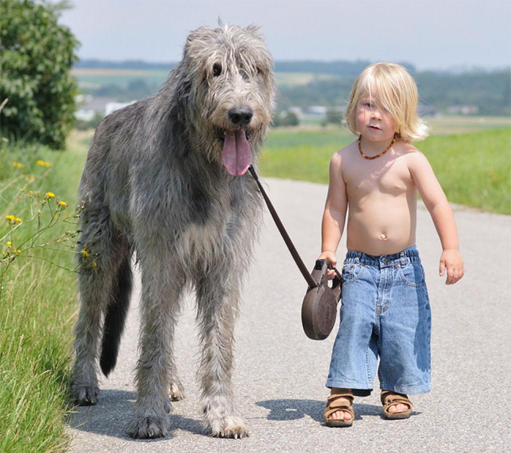 bebes perros gigantes fotografía (2)