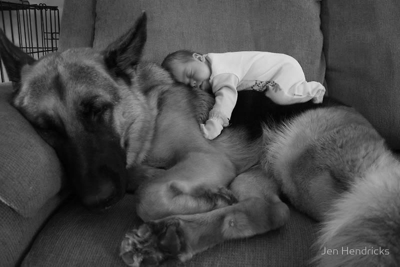 bebes perros gigantes fotografía (16)