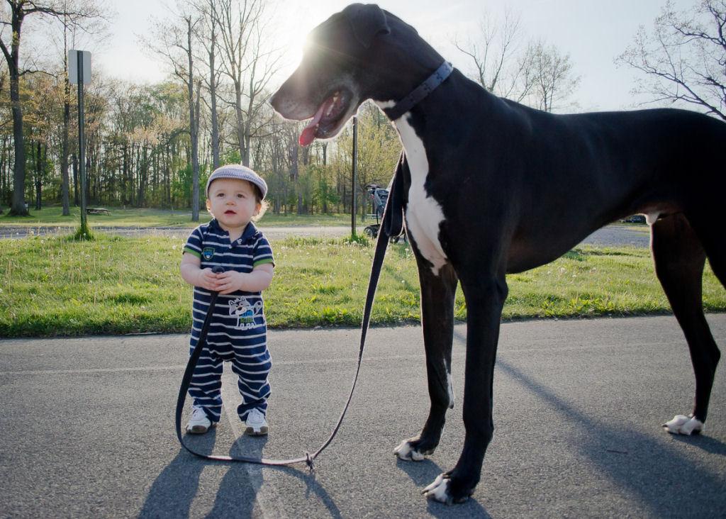 bebes perros gigantes fotografía (13)