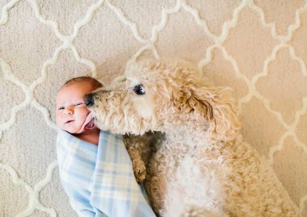 bebes perros gigantes fotografía (12)