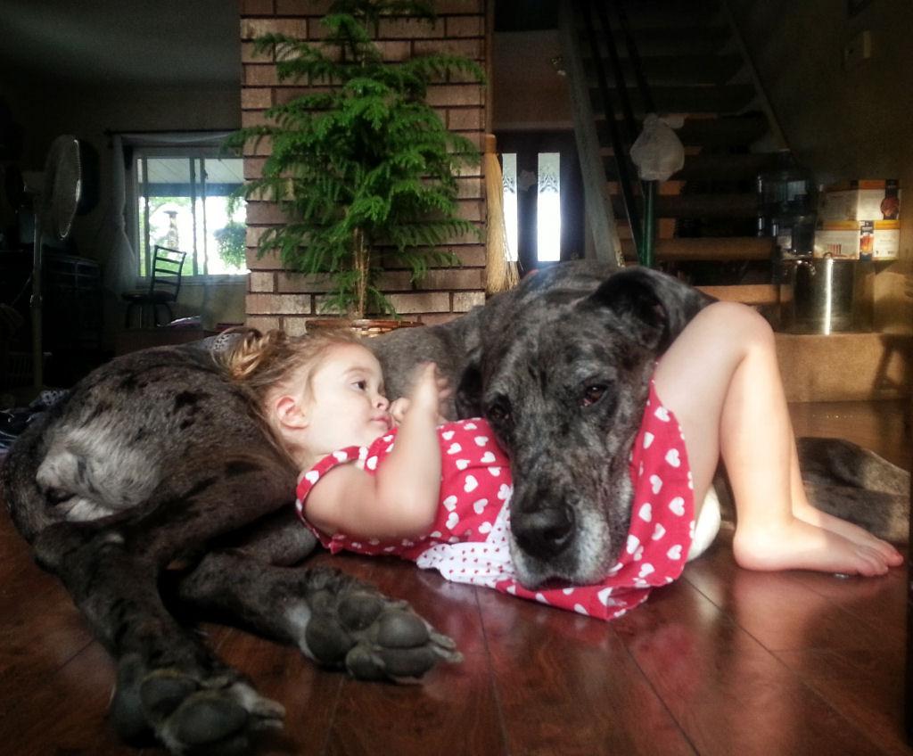 bebes perros gigantes fotografía (11)