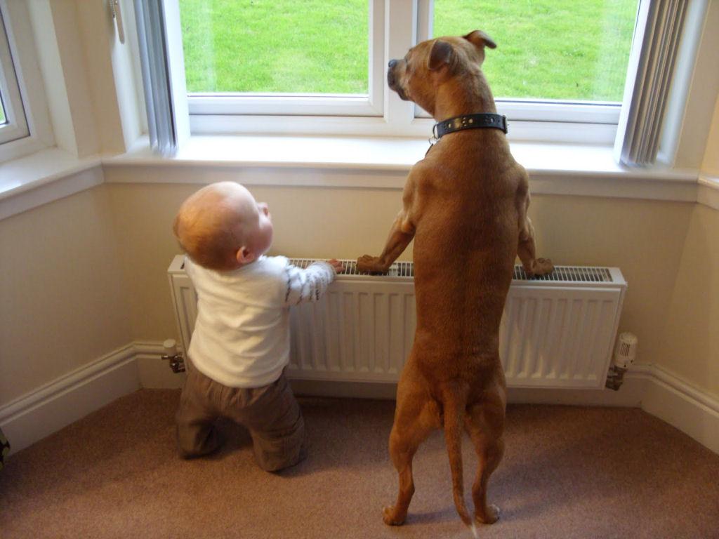 bebes perros gigantes fotografía (10)