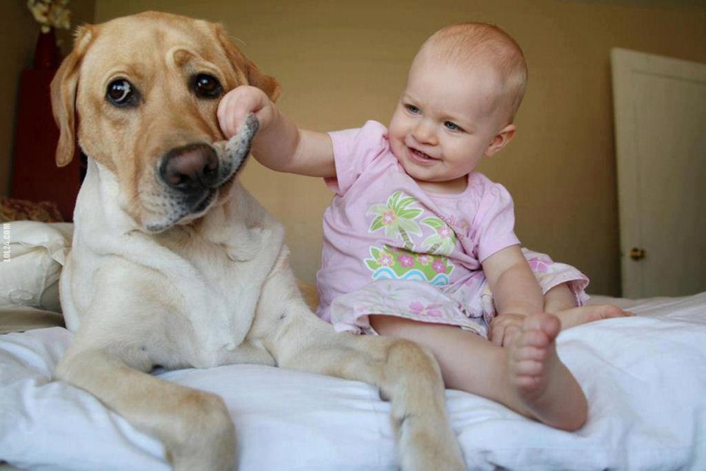 bebes perros gigantes fotografía (8)