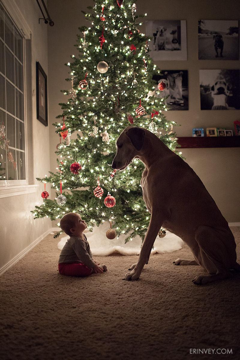 bebes perros gigantes fotografía (1)