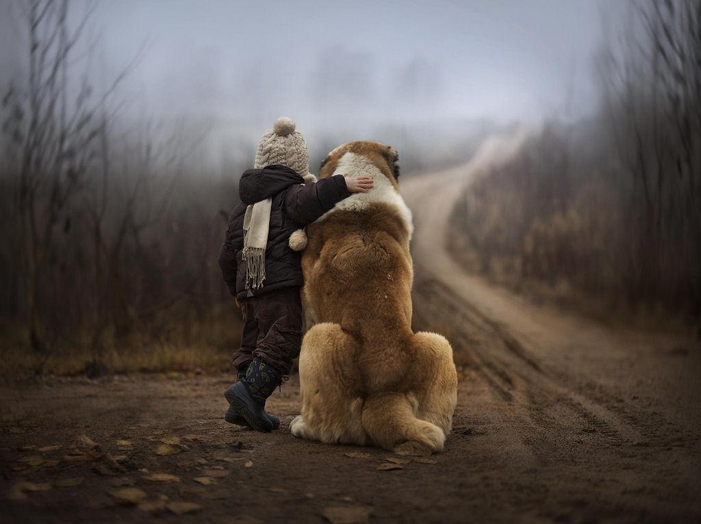 bebes perros gigantes fotografía (7)