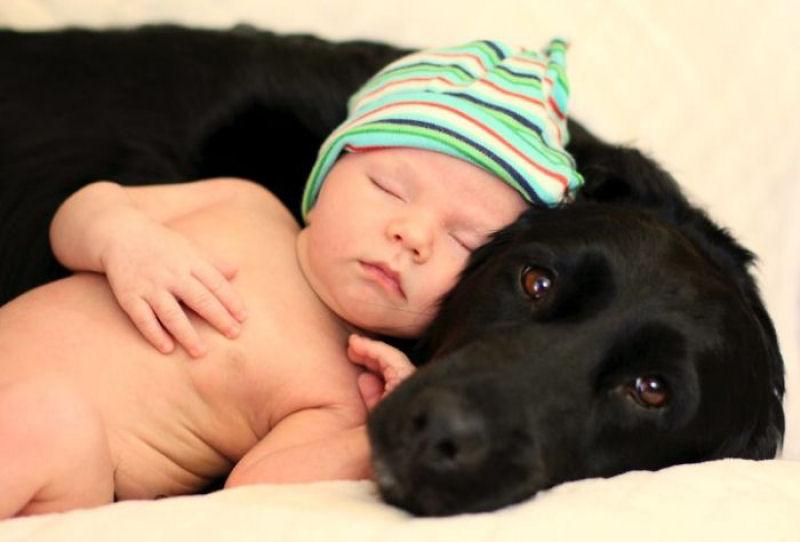bebes perros gigantes fotografía (5)