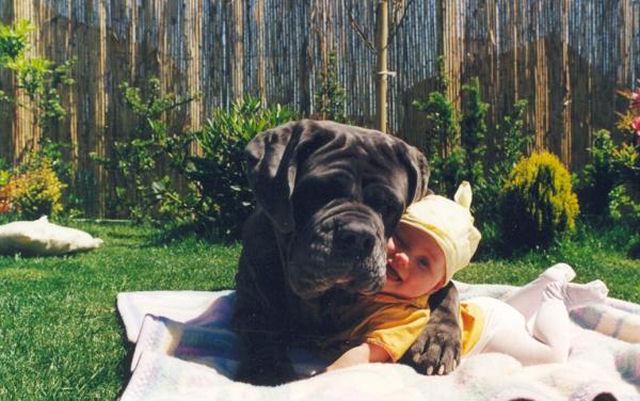 bebes perros gigantes fotografía (31)