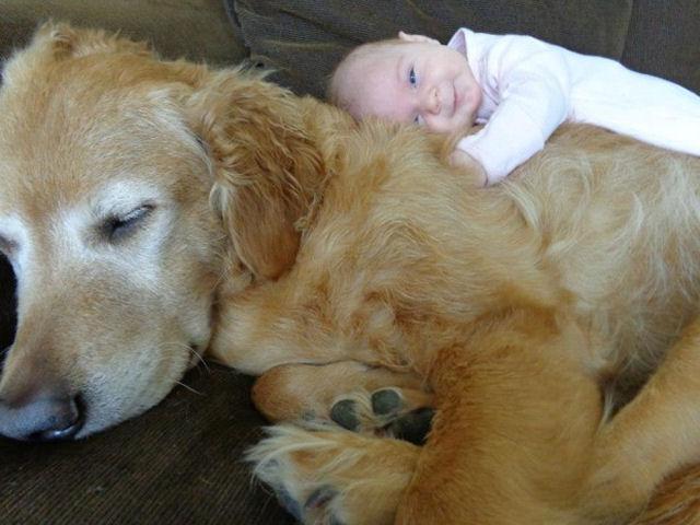 bebes perros gigantes fotografía (30)