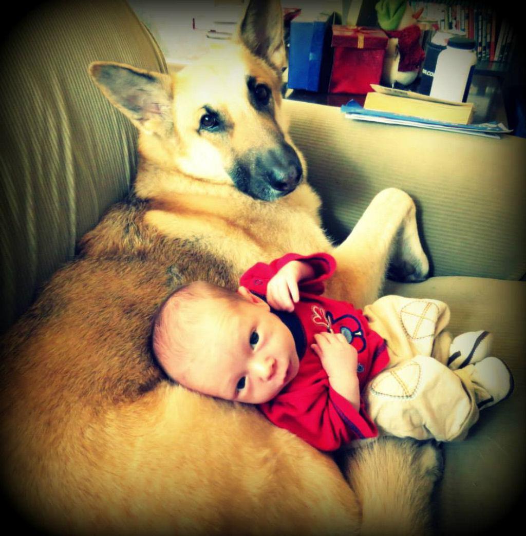 bebes perros gigantes fotografía (29)