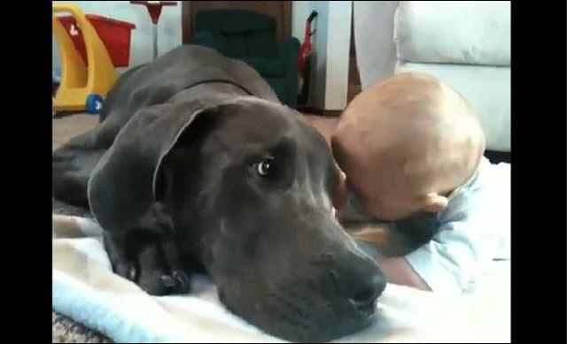 bebes perros gigantes fotografía (28)
