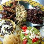 Cinco insectos comestibles que deberías probar