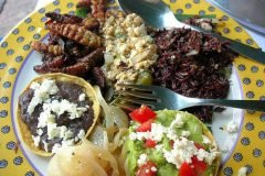 comida mexicana insectos